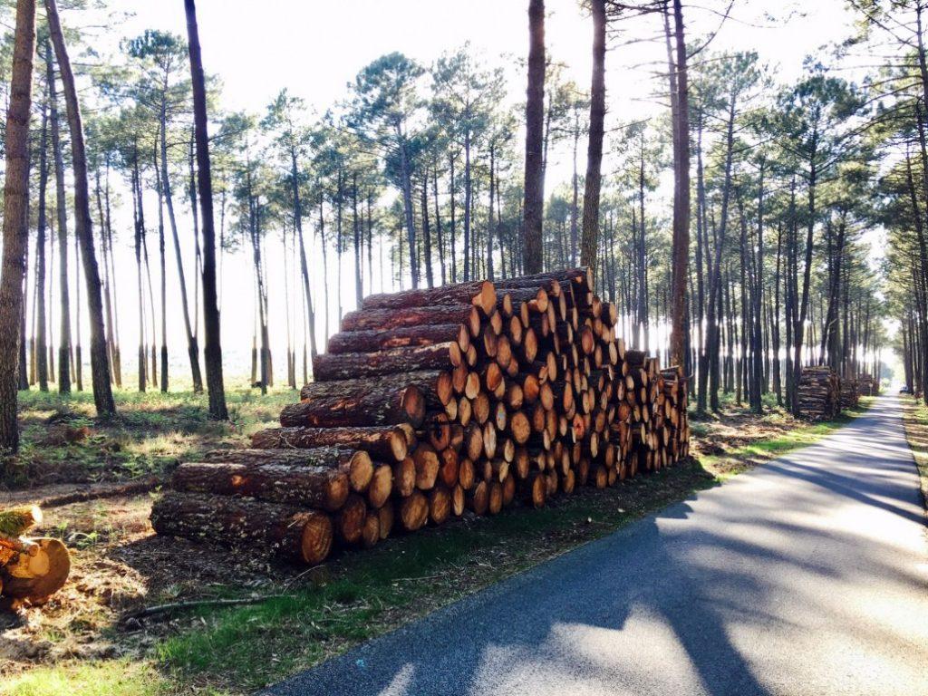 Proyecto Santa Rosa Biomasa en Argentina